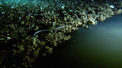 of bottom gulf lake Methane